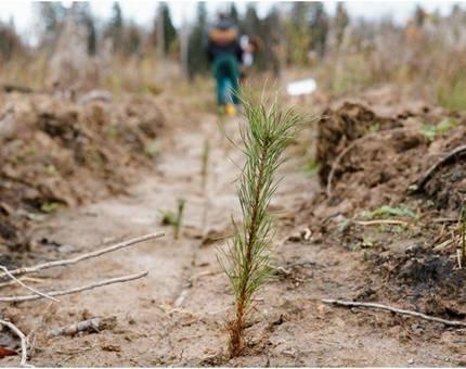 Масштабная программа по восстановлению Подмосковных лесов стартовала в Красногорском районе - Фото