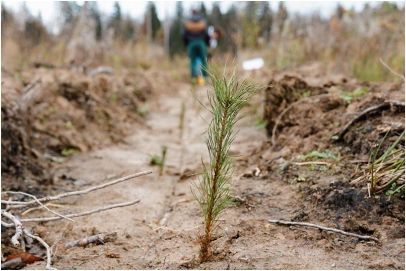 Масштабная программа по восстановлению Подмосковных лесов стартовала в Красногорском районе