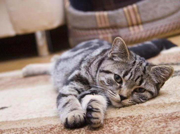 Животные в доме: 5 способов поддержания порядка и чистоты