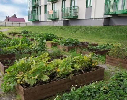 В ЖК «Митино-Дальнее» собирают урожай - Фото