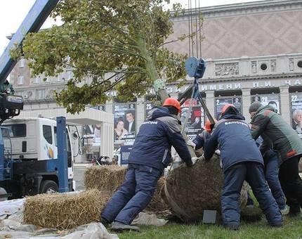 В Москве высадка деревьев закончится к середине декабря - Фото