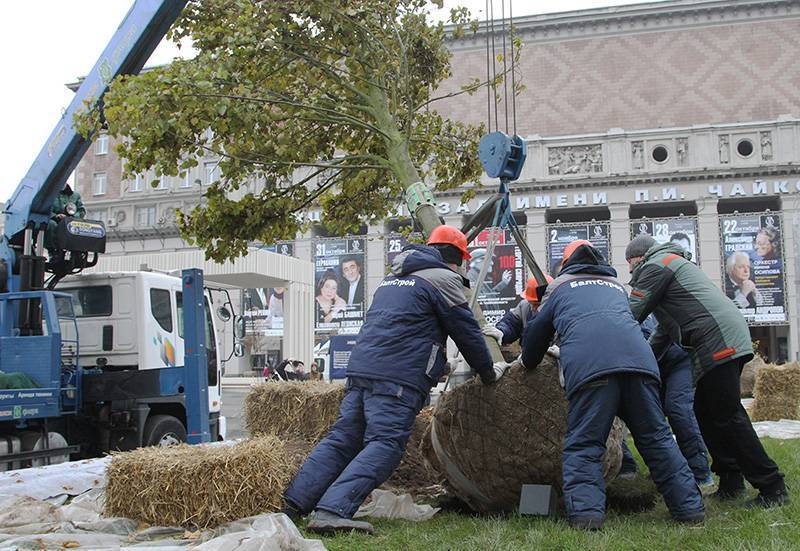 В Москве высадка деревьев закончится к середине декабря
