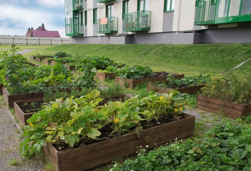 В ЖК «Митино-Дальнее» собирают урожай