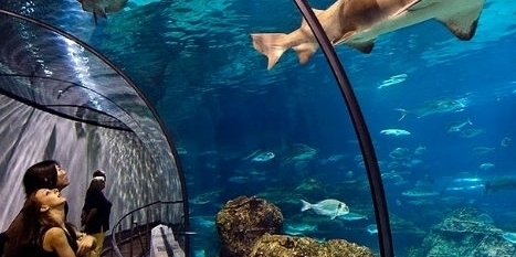Один из крупнейших в Европе океанариумов построят на ВВЦ