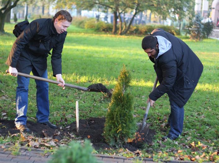 Власти Подмосковья задумались о проблеме зеленых насаждений