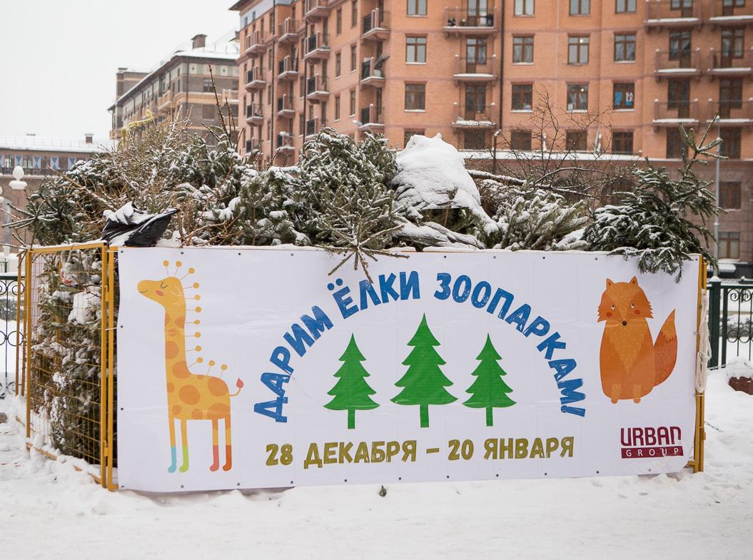 Жители Подмосковья собрали новогодние ели на корм животным из зоопарков
