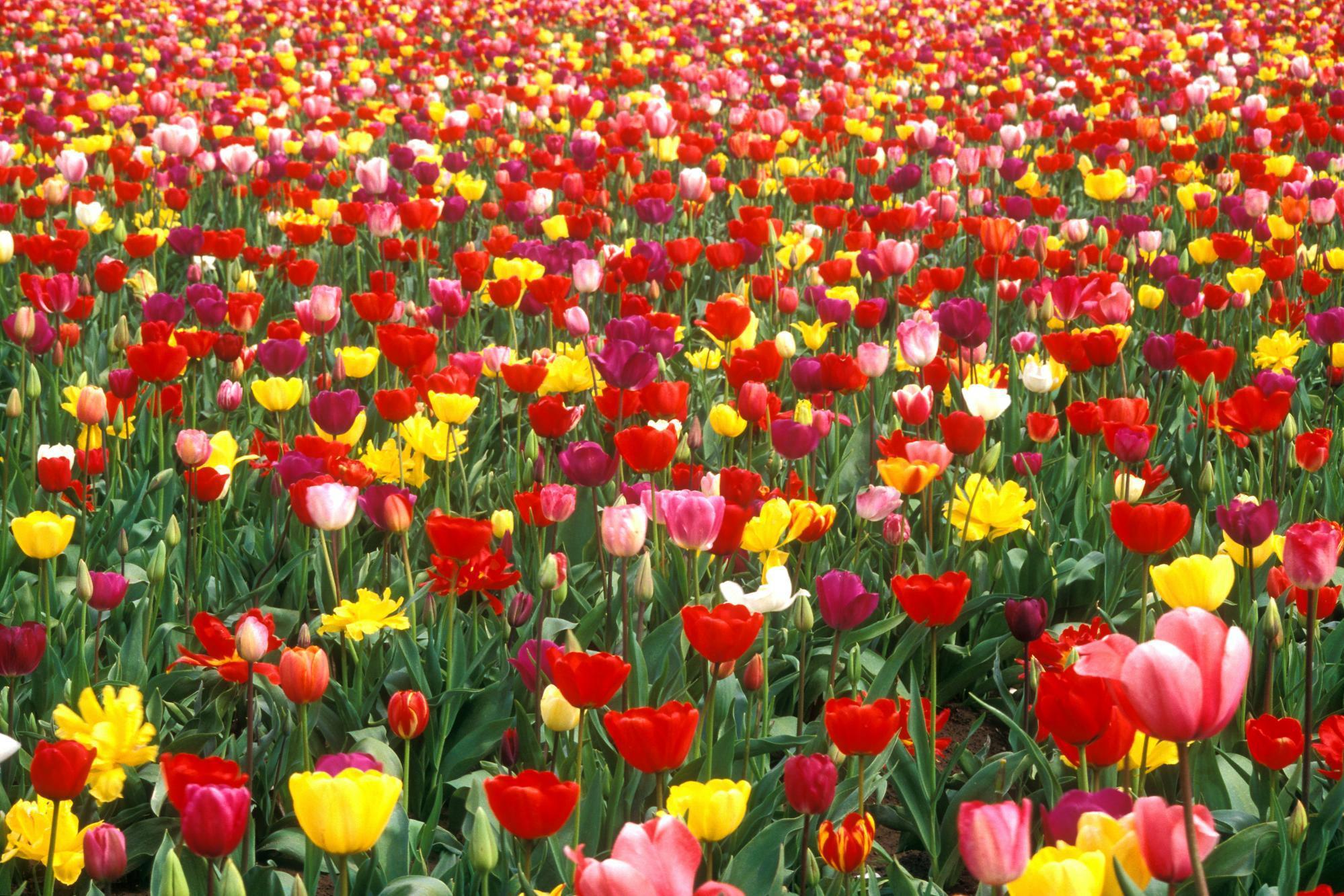 Этим летом в Москве будут цвести более 60 млн цветов
