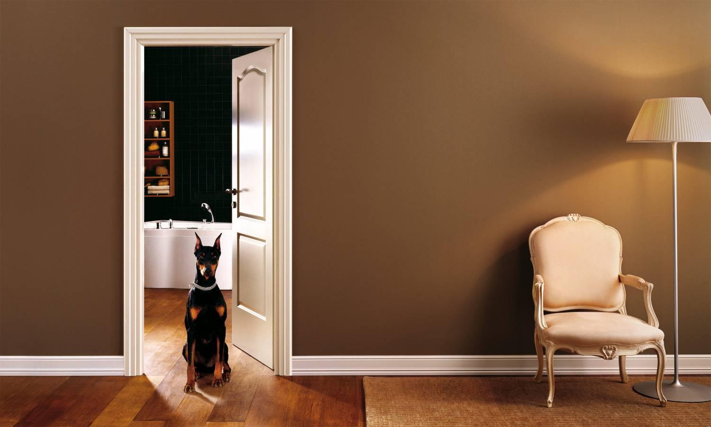 Любителям животных предлагают поселиться в квартирах нового типа