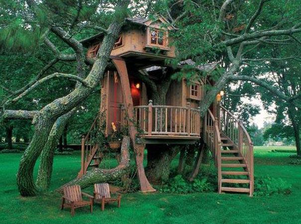 Высоко сижу, далеко гляжу: дома на деревьях