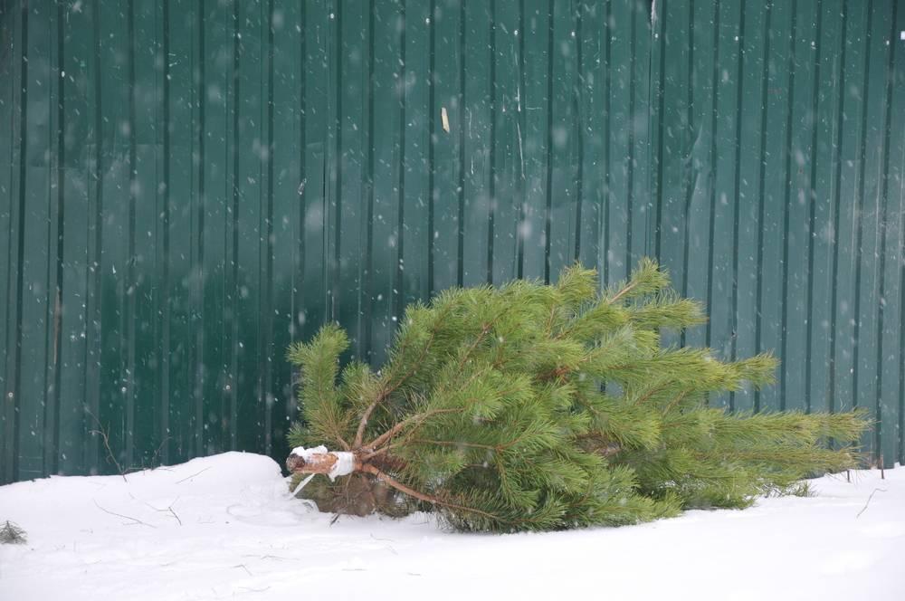 этом выброшенная елка фото этой странице можете
