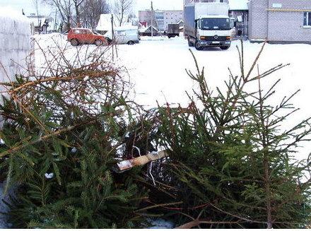 Старые новогодние елки скормят обитателям подмосковного зоопарка