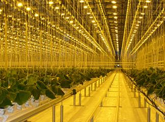 В Москве современные агрокластеры сменят старые овощебазы