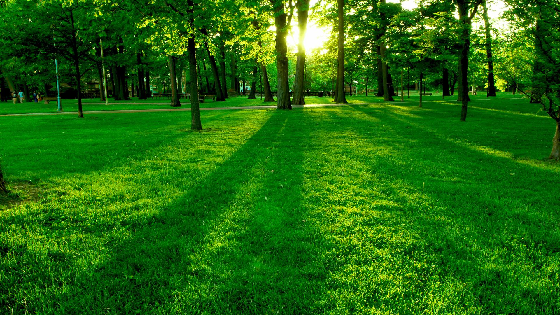 Под новые парки в Подмосковье отведут 640 га земли