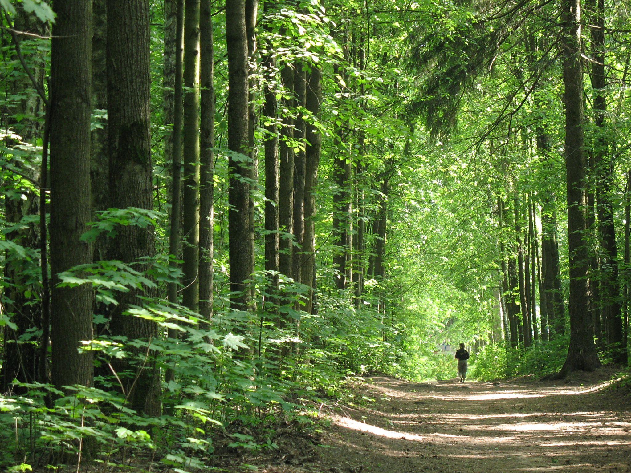 В России крупные города окружат лесами